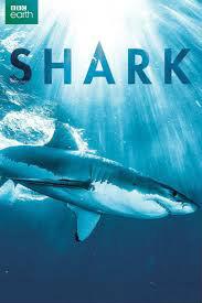 Shark Drama Episodes Watch Online